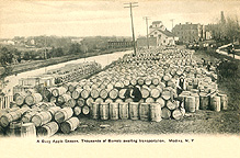 Barrels of apples waiting to be loaded onto a canal boat